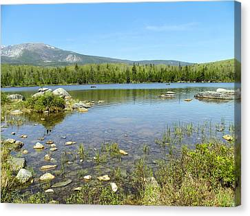Canvas Print featuring the photograph Distant Moose by Gene Cyr