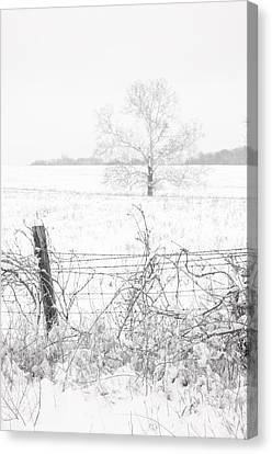 Distant Tree Canvas Print