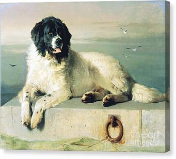 Distinguished Member Of The Humane Society Canvas Print by Pg Reproductions