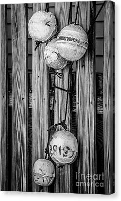 Distressed Buoys On Fencing Key West - Black And White Canvas Print by Ian Monk