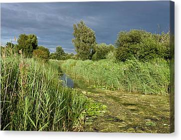 Ditch And Reedbeds Canvas Print by Bob Gibbons