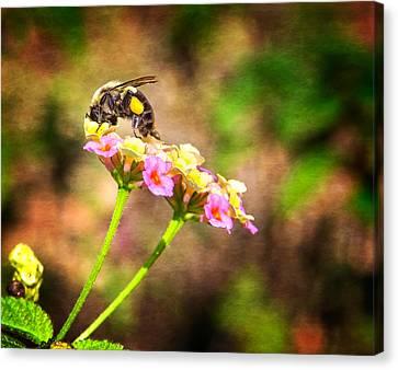 Beauty Mark Canvas Print - Dive Right In Honey by Mark Andrew Thomas