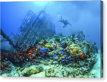 Diver At The Wreck Canvas Print by Debra and Dave Vanderlaan