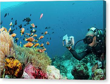 Diver Photographing Anemonefish Canvas Print by Scubazoo