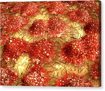 Dividing Cancer Cells Canvas Print by Juan Gaertner