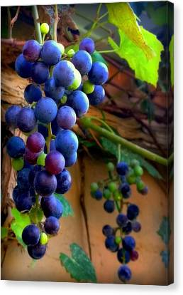 Purple Grapes Canvas Print - Divine Perfection by Karen Wiles