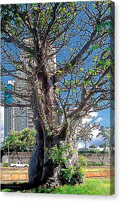 Ala Wai Canvas Print - Divisions by Terry Reynoldson