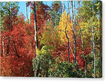 Dixie Autumn Canvas Print