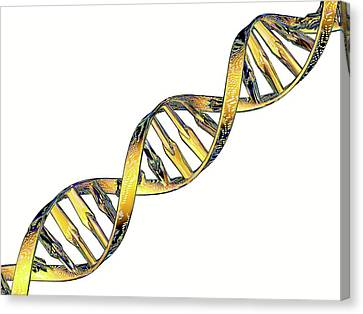 Dna Double Helix Reflecting Microarray Canvas Print by Pasieka