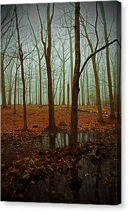 Do We Dare Go Into The Woods Canvas Print by Karol Livote