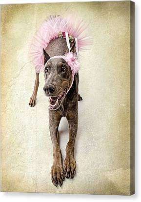 Headband Canvas Print - Doberman Ballerina  by Susan Schmitz