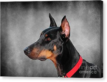 Zeus Canvas Print - Doberman Pinscher by Paul Ward