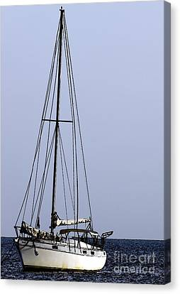 Canvas Print featuring the photograph Docked At Bay by Lilliana Mendez