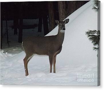 Doe A Deer Canvas Print by Brenda Brown