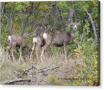 Doe And Two Fawns Canvas Print by Deborah Moen