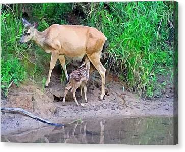 Doe With Nursing Fawn Canvas Print by Nick Kloepping