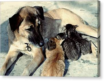 Dog Adopts Kittens Canvas Print by Lanjee Chee