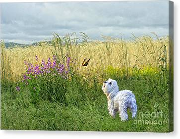 Dog And Butterfly Canvas Print by Andrea Auletta