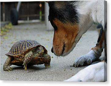 Dog And Turtle Canvas Print
