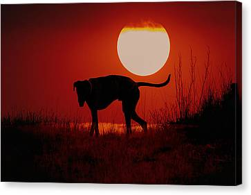 Dog At Sunset Canvas Print by Jana Thompson