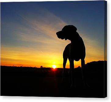 Dog Days Of Summer Canvas Print