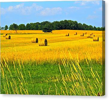 Dog Days Of Summer Canvas Print by Frozen in Time Fine Art Photography