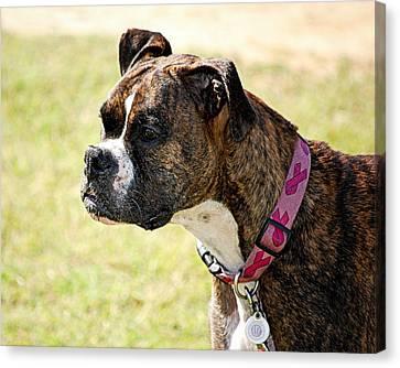 Dog Gone Pink Canvas Print by AJ  Schibig