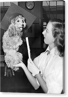 Dog Graduates From School Canvas Print by Underwood Archives