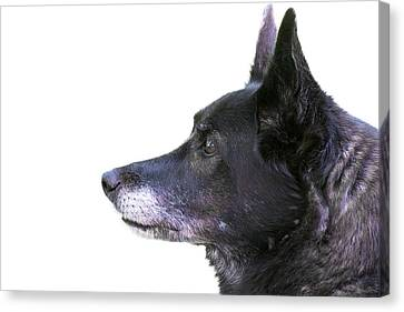 Working Dog Canvas Print - Dog Head Profile Isolated On White by Donald  Erickson