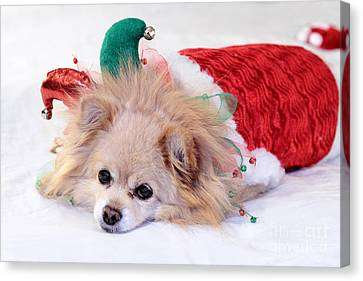 Dog In Christmas Costume Canvas Print by Charline Xia