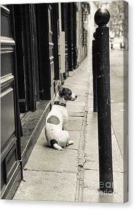 Dog In Paris Canvas Print by Diane Diederich