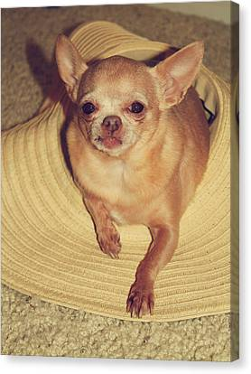 Tiny Dogs Canvas Print - Dog In The Hat by Laurie Search