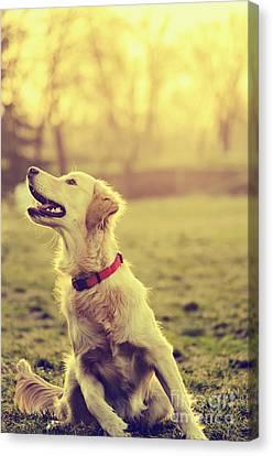 Dog In The Park Canvas Print by Jelena Jovanovic