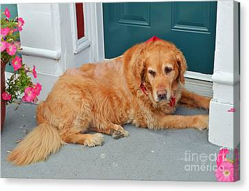 Dog In Waiting Canvas Print by Eva Kaufman