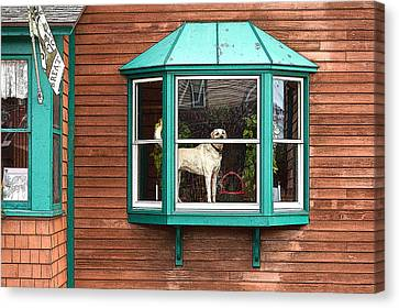 Dog In Window Canvas Print
