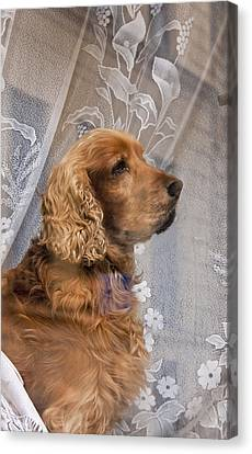 Canvas Print featuring the photograph Dog In Window by Dennis Cox WorldViews