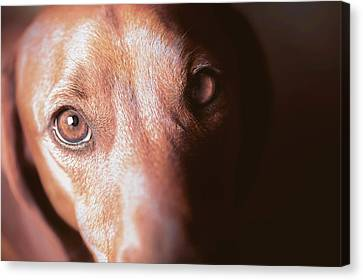 Dog Looking Towards Camera Canvas Print