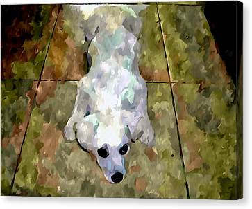 Dog Lying On Floor  Canvas Print by Lanjee Chee