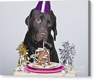 Dog Making Birthday Wish Canvas Print by Justin Paget