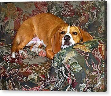 Dog - Mr. Oliver Is Comfy Canvas Print by Maureen Tillman