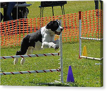 Canvas Print featuring the photograph Dog Obedience by Paul Miller