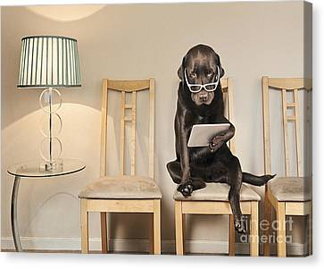 Dog On Ipad Canvas Print by Justin Paget