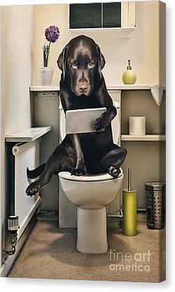 Dog On Toilet With Ipad Canvas Print