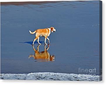 Dog On Water Mirror Canvas Print