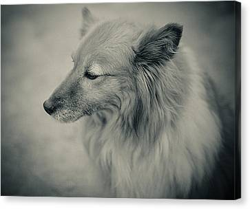 Lonely Dog Canvas Print by Pro Shutterblade