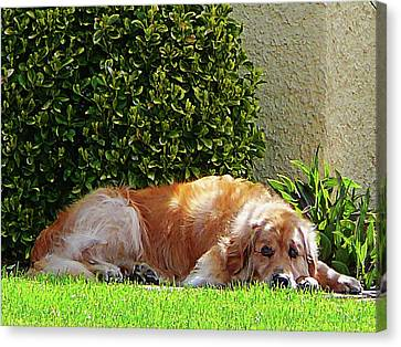 Dog Relaxing Canvas Print by Susan Savad