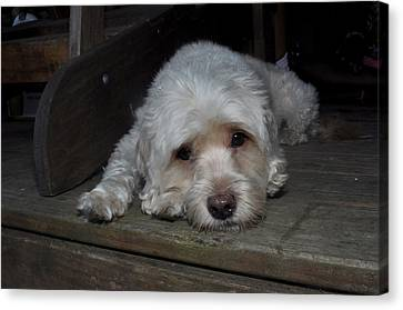 Dog Resting On Porch Canvas Print by Diane Lent