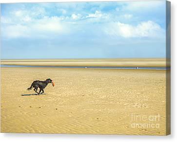Dog Running On A Beach Canvas Print