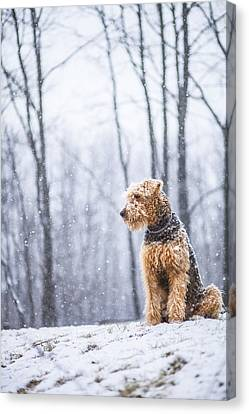Dog Sits Under The Snowfall Canvas Print