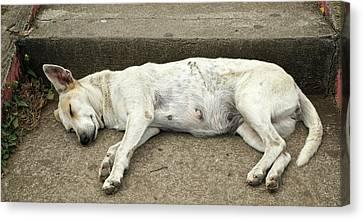 Dog Sleeping, Catarina, Masaya Canvas Print